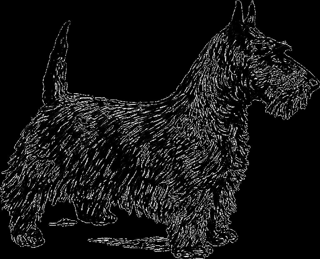 fox terrier, terrier, dog-153493.jpg